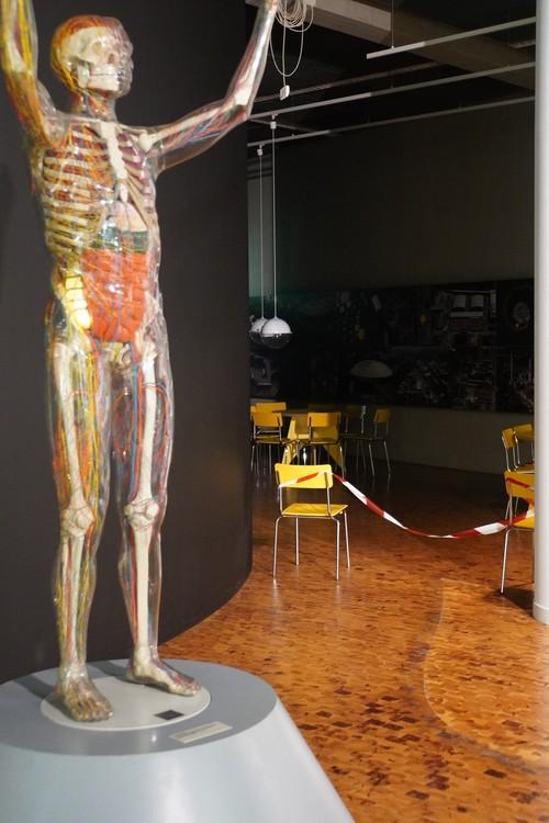 Dasa Museum. Mit Flatterband abgesperrter Bereich. Modell Mensch mit Skelett und Organgen