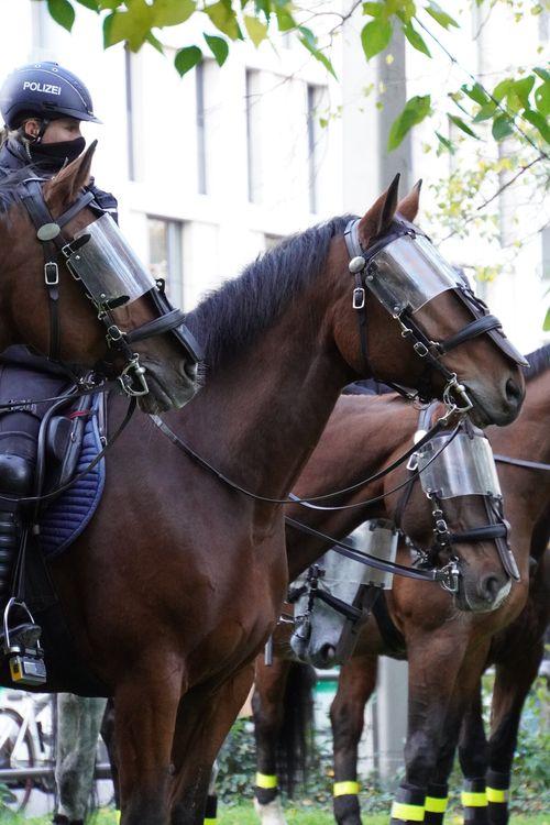 Polizei-Pferde am Tag der Querdenken Demo