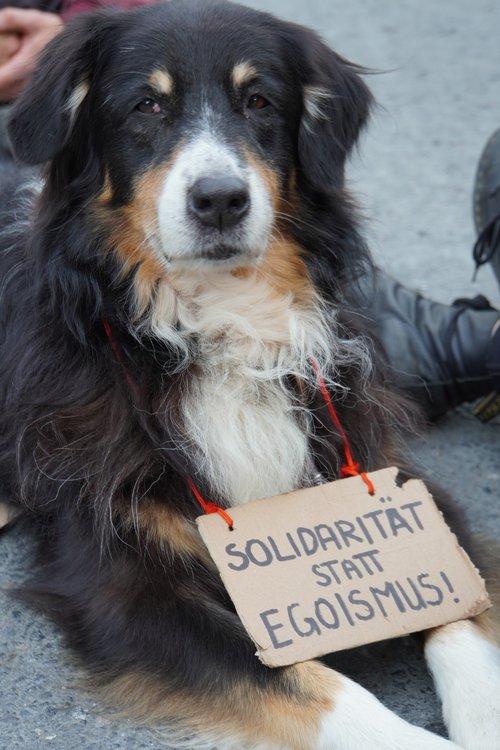 Querdenken-Gegendemo. Hund mit Schild. Solidarität statt Egoismus